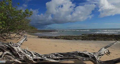 Playa Avellana Costa Rica 3