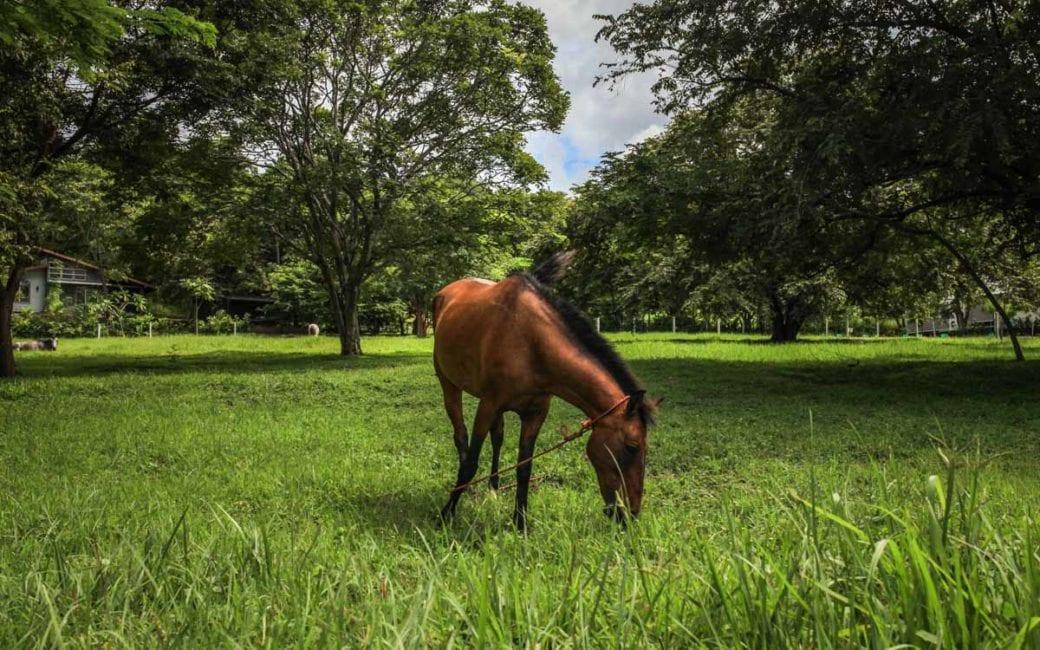 Ventanas horses