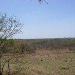 570_Avellanas_lots_030