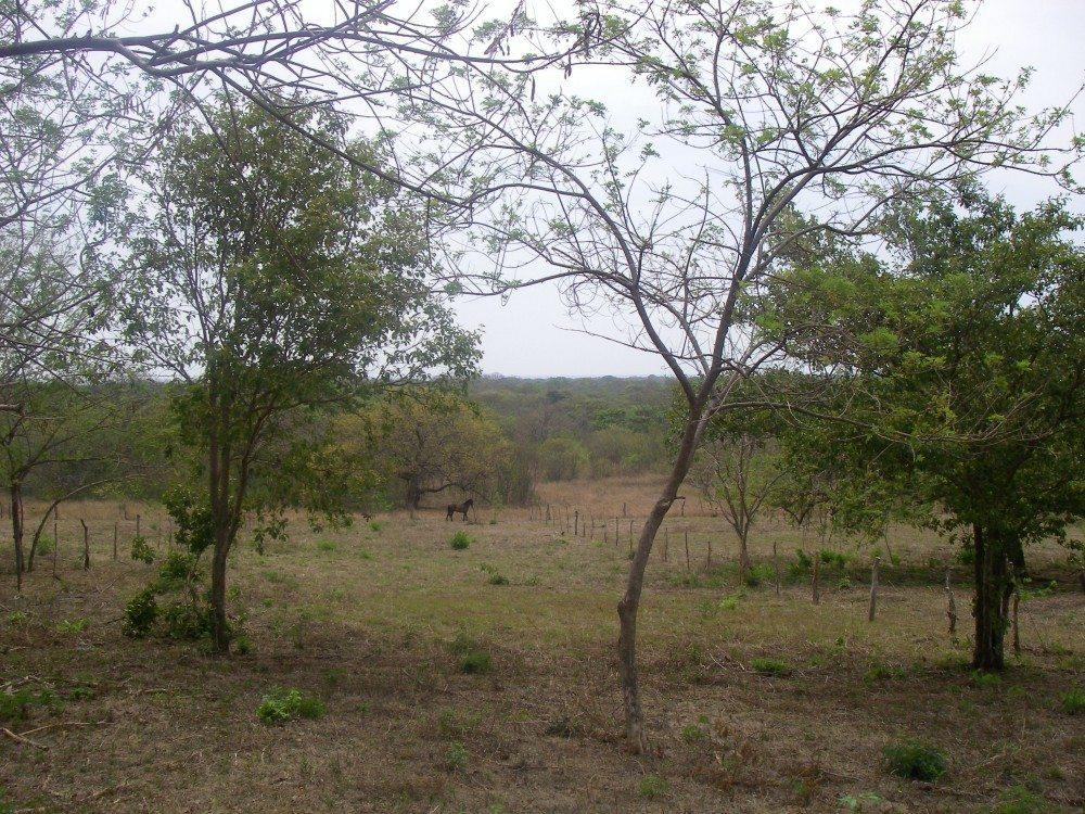 Vista Avellanas Lot View 008