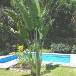 pool-travel-palm-calma