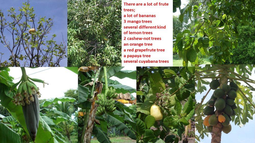frutes