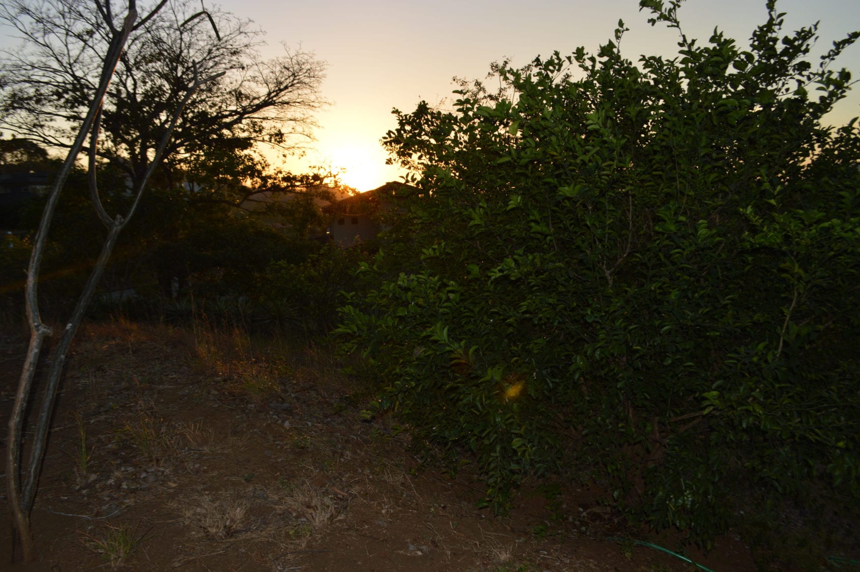 4 – Sunset Over Trees – Oceanview Lot in Gated Community Close To Beach